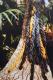 300 jarig bestaan van De Hortus Botanicus, 1982